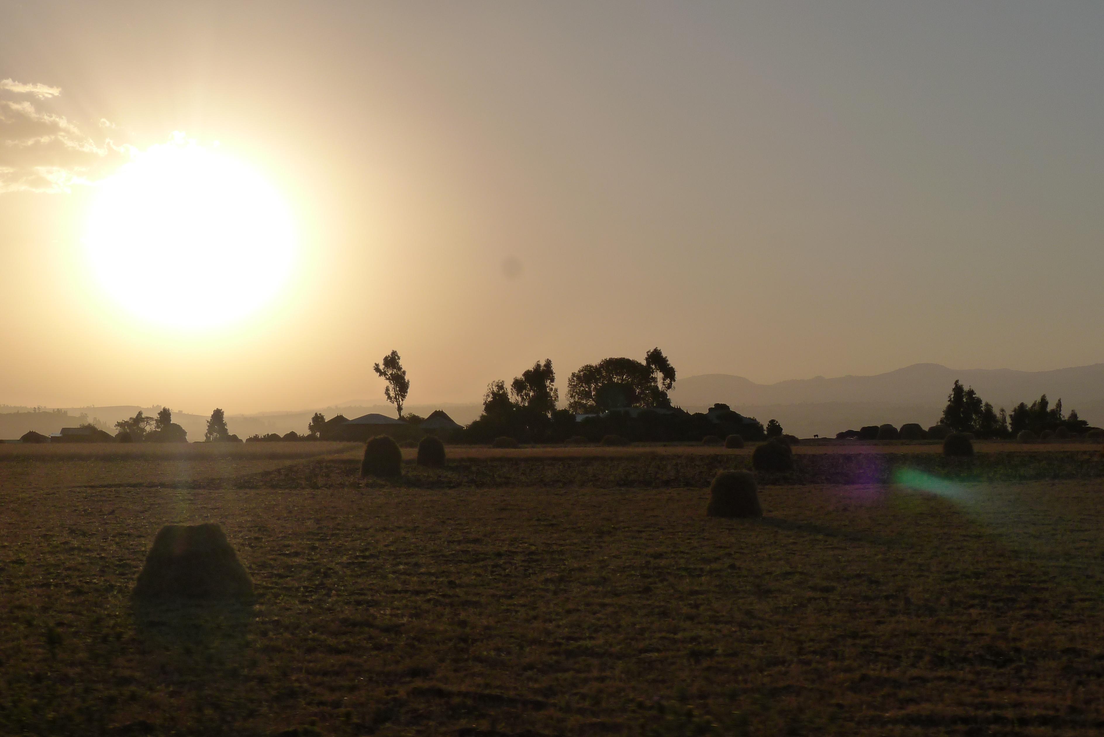 Botanica Ethiopia
